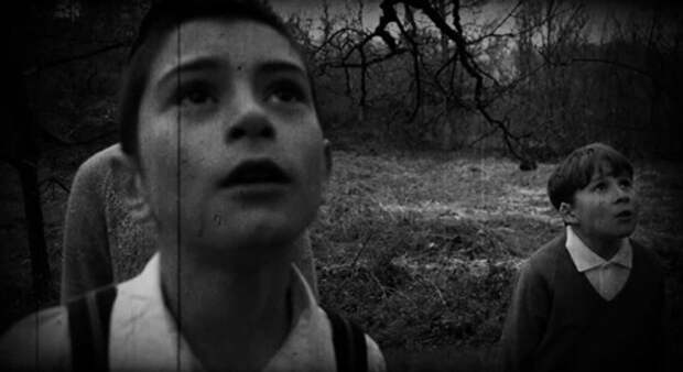 «Кто положил Беллу в вяз?»: жуткая находка в лесу потрясла маленький город