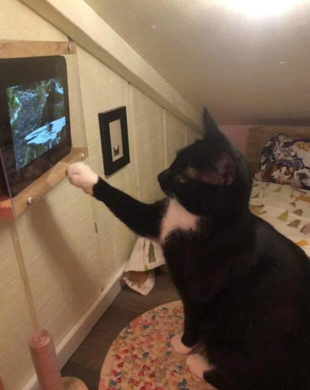 Хозяин сделал для своего кота собственную комнату