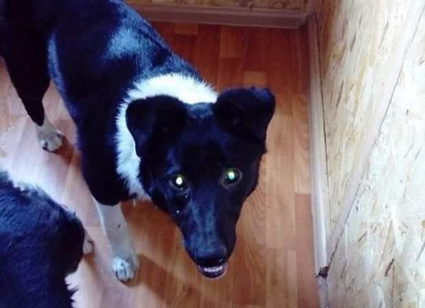 Собаку, которая полгода жила под киоском в Челябинске, вызволили из плена