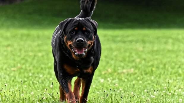 Кинолог поделился рекомендациями по выгулу собак в жаркую погоду