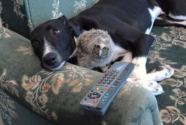 Удивительная и милая дружба животных