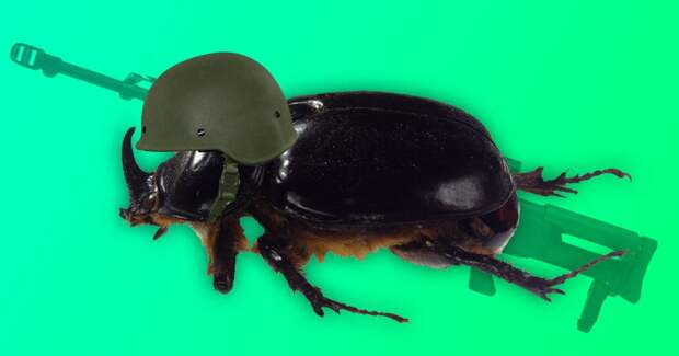 Бомбы из блох и жуки-киборги: 7 фактов о том, как использовали насекомых на войне