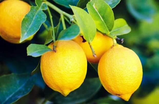 Болезни, которые можно лечить с помощью лимона