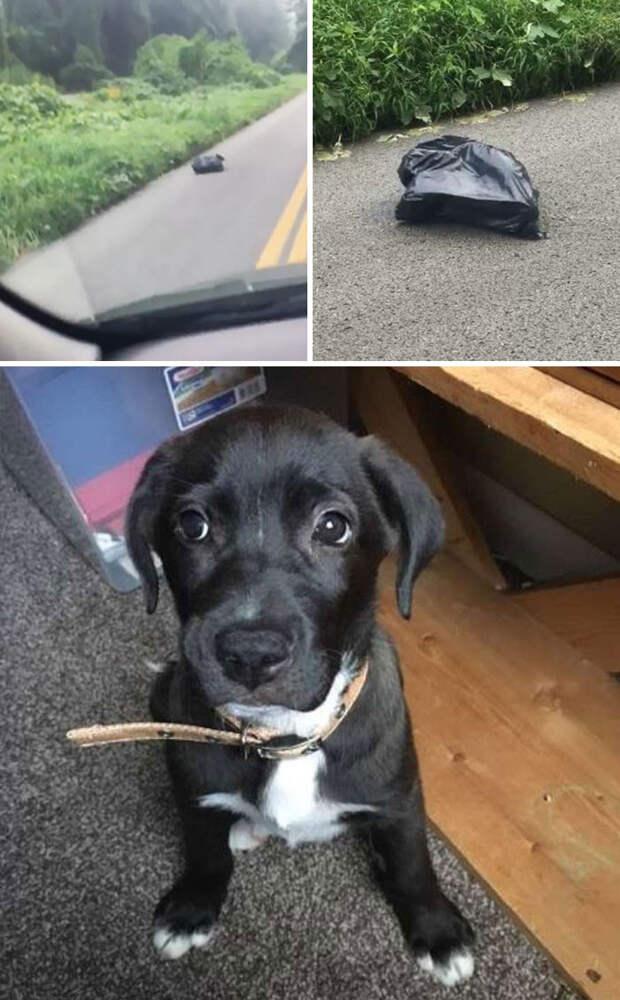 Увидев шевелящийся мешок на обочине, женщина остановилась и спасла запертую в нем собаку Счастливый конец, животные, спасение