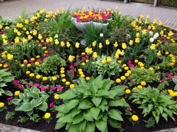 Цветы во дворе на Осипенко сажают неравнодушные жители