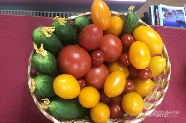 Спасаем томат. Как защитить растения от фитофтороза