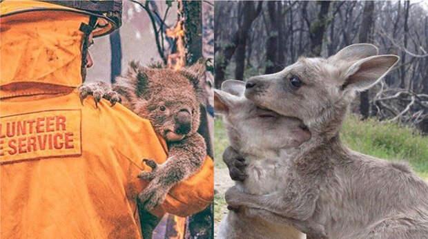 Австралия в огне и еще 5 новостей, которые вы могли проспать