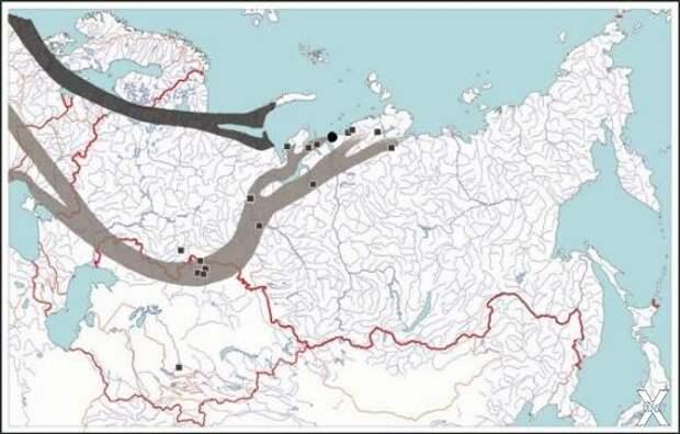 Пути миграции арктических видов гусей