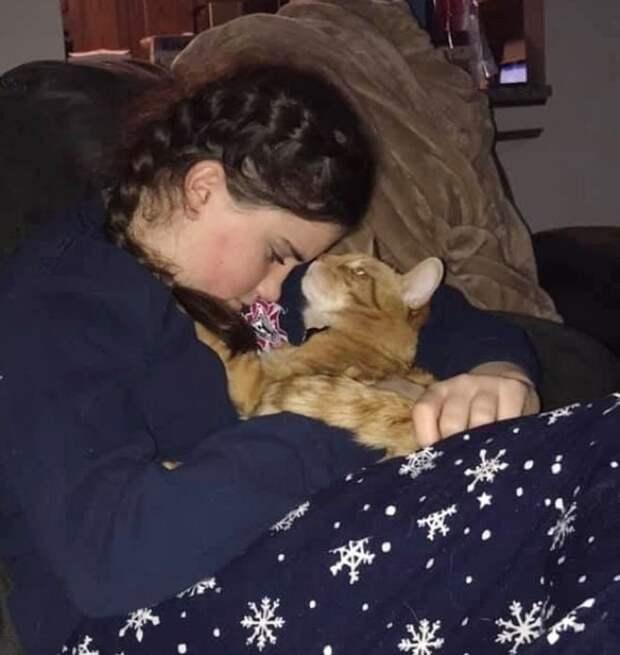 Кот в объятиях