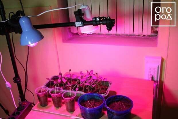 Посев овощей на рассаду: вычисляем оптимальные сроки