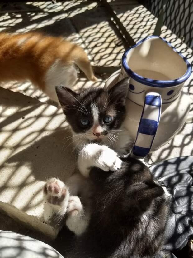 Бездомная кошка родила и спрятала котят! Но потом передумала и оставила человеку сюрприз на пороге…