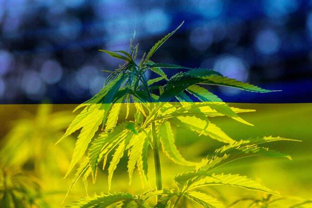 На Украине легализовали использование каннабиса для медицинских целей