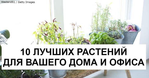 10 растений, которые притягивают в дом положительную энергию