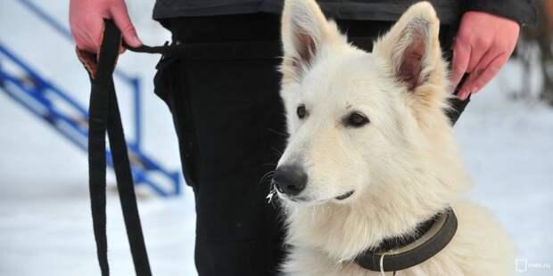 Праздник, посвященный собакам-героям войны, пройдет в Грачёвке