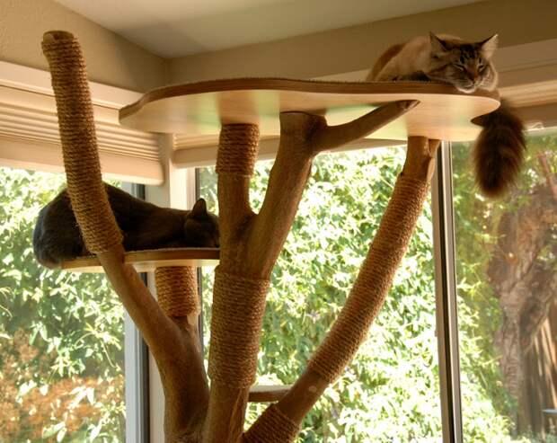 Кто не в домике... тот не кот! (трафик)