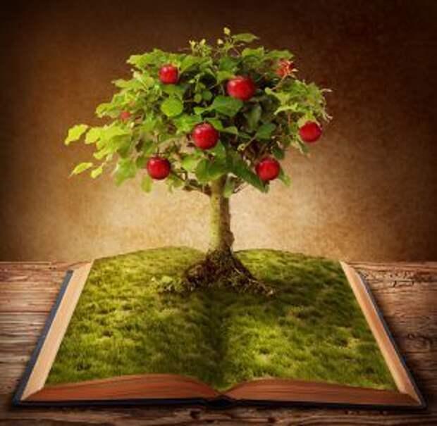 Тест: Выберите книгу мудрости и узнайте свой путь к лучшей жизни