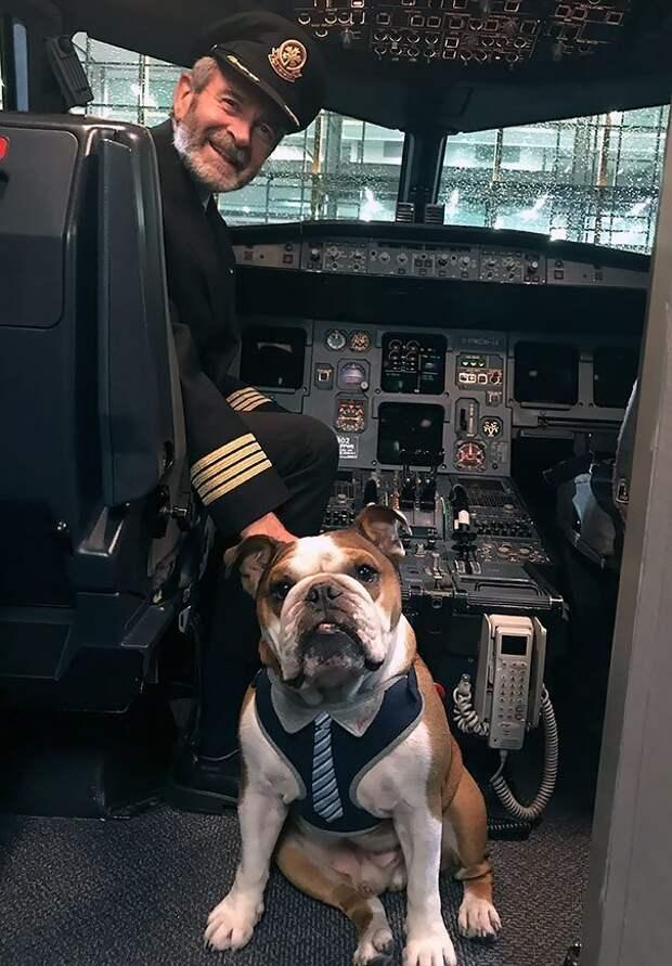 18. Знакомство с командиром воздушного судна борт, животные, пассажир, перелет, полет, самолет, фото