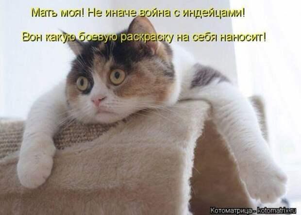 Самые свежие и самые прикольные котоматрицы за прошедшую неделю