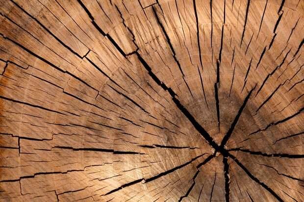 Во дворе на Бескудниковском спилили аварийное дерево