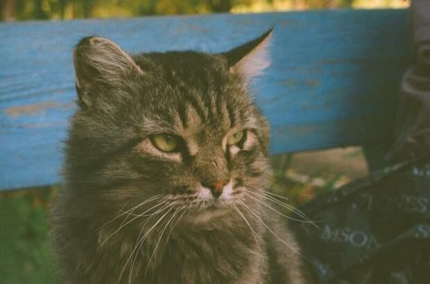 Твоё лицо, когда на лавочку подсаживаются незнакомые Хвостатые, братья наши меньшие, город, кот, кошка, улица, уличные кошки, эстетика