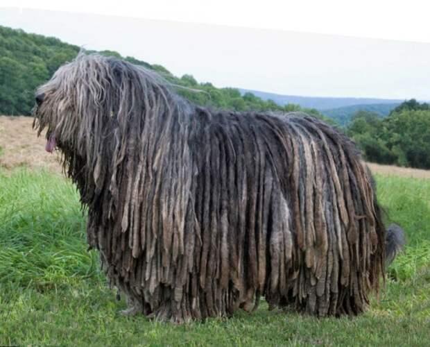 15 замечательных пород собак, о которых мы никогда не слышали