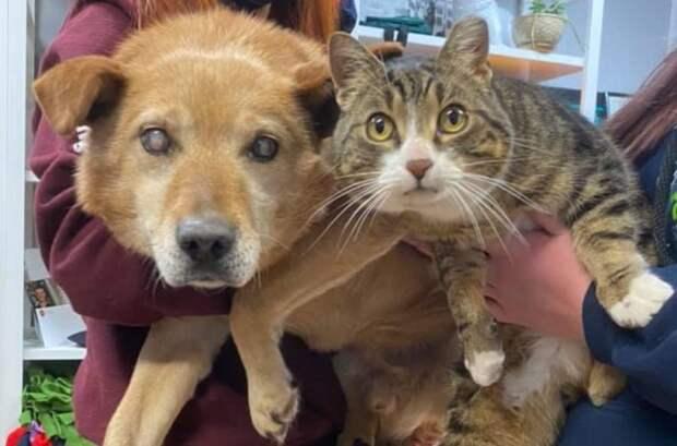 История о котике-повадыре и слепой собачке