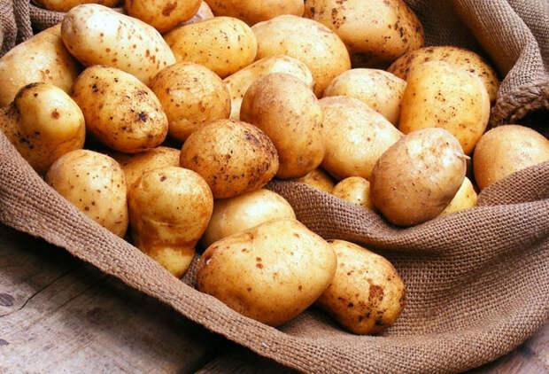 Китайский способ сажать картошку