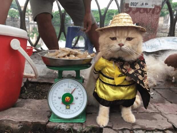 Кот, продающий рыбу на вьетнамском рынке