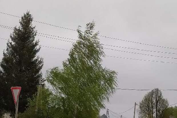 В Тамбовской области ожидается усиление ветра