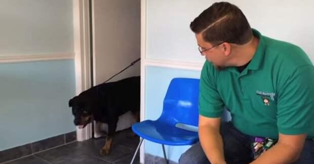 Узнает ли пес хозяина через 8 лет (15 млн. просмотров)