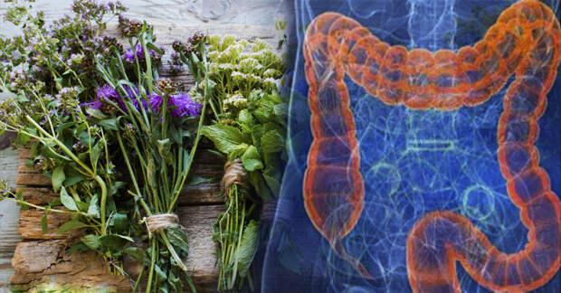 5 травяных средств для улучшения работы кишечника