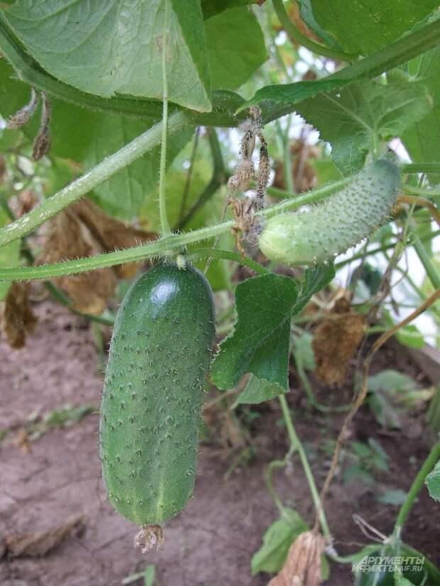 Формирование– залог высокого урожая.