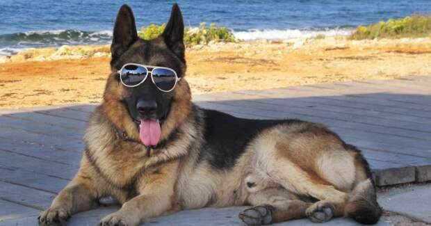 История Гюнтера IV — самого богатого пса на планете