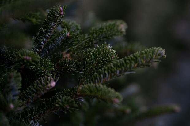 Миллион молодых елок и сосен появится в 2022 году в лесах Удмуртии