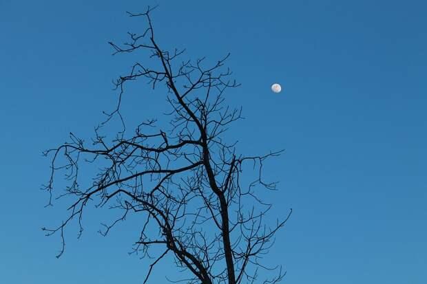 Луна, Мертвые Ветви, Сухостой, Отраслей, Дерево, Небо