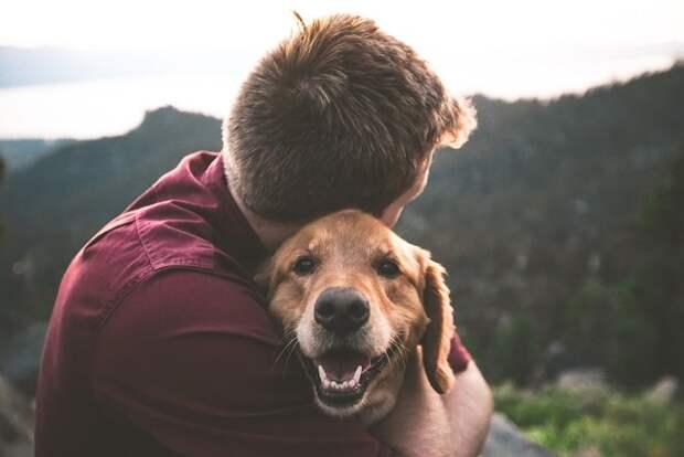 Уиппет или бигль? Тест на знание пород собак