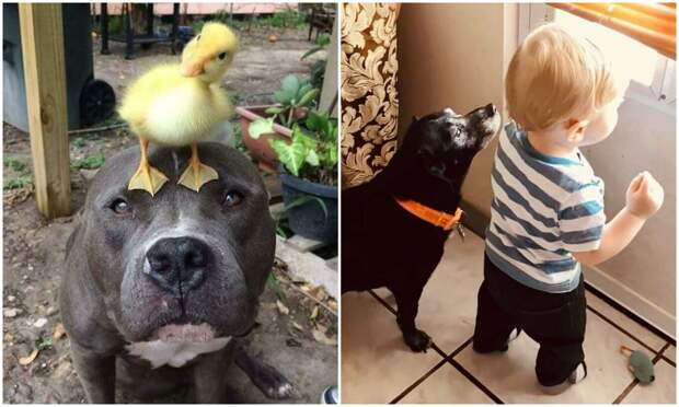 Мы для них – вся жизнь: 20+ фото с собаками, которые греютдушу