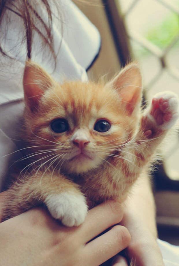 Милые котики для позитивного настроения (11 фото)