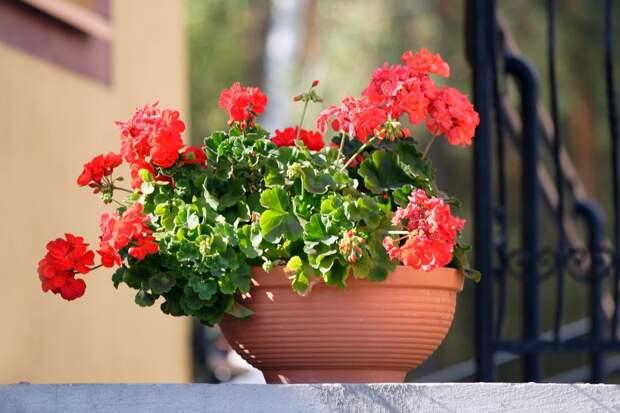 Чем подкормить домашние цветы, чтобы пышно цвели