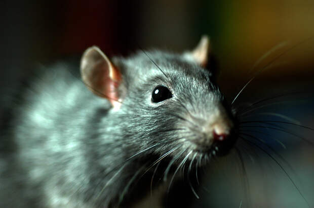 Второклашки отравились крысиным ядом в новосибирской школе