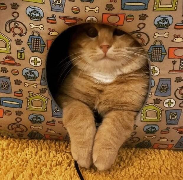 Спасение замерзшего кота