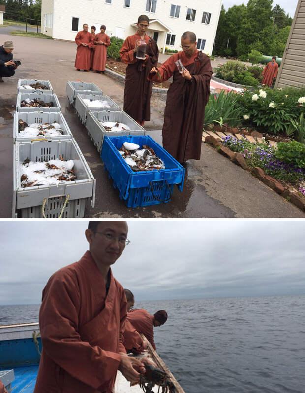 Буддистские монахи купили 250 килограммов лобстеров, чтобы отпустить их обратно в океан Счастливый конец, животные, спасение
