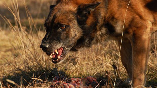Ученые назвали самые агрессивные породы собак