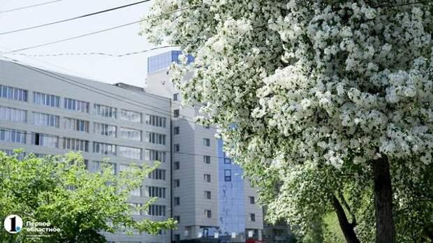 До +36°C поднимутся столбики термометров вЧелябинской области