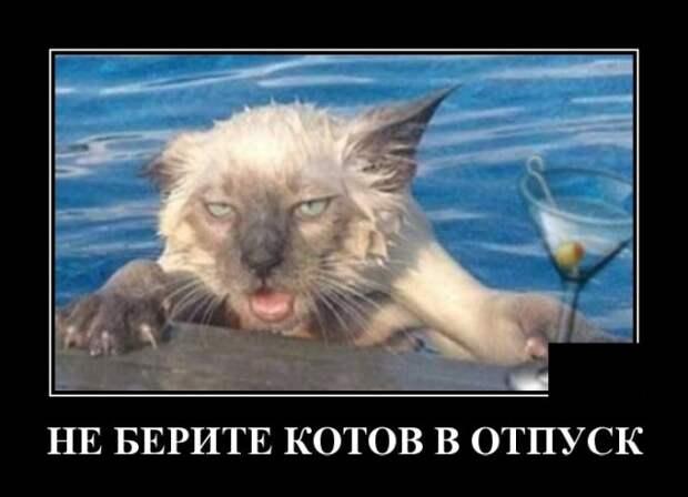 Демотиватор про котов и отпуск