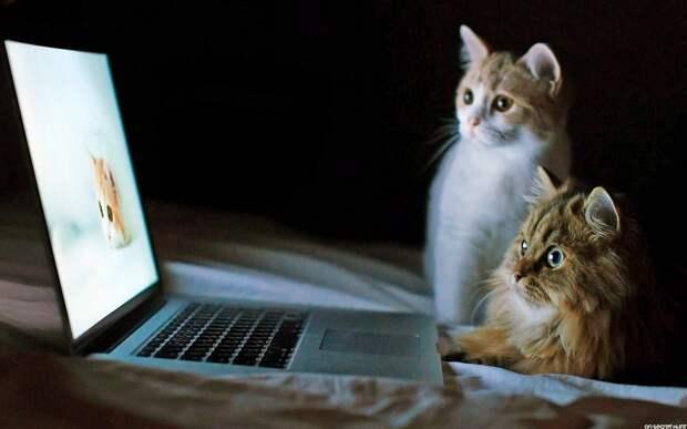 Примерные темы кошачьих форумов