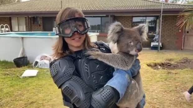 «А она как прыгнет!» Журналистка нарядилась в бронежилет для встречи с коалой, «злобным ядовитым медведем»