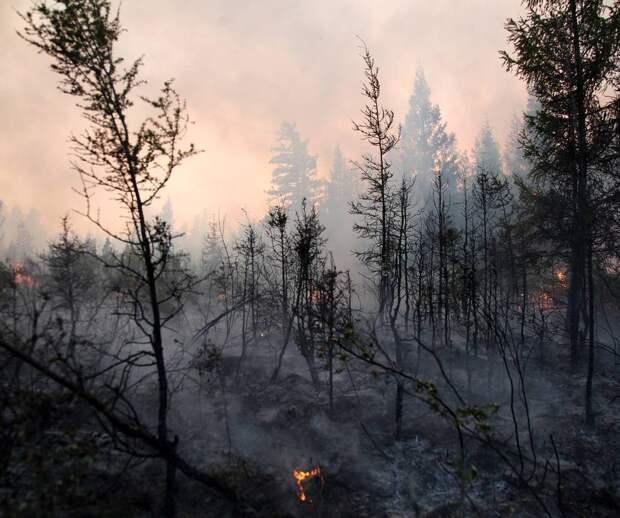Итоги жаркого лета на трех континентах: первые пожары в Арктике и атаки молний