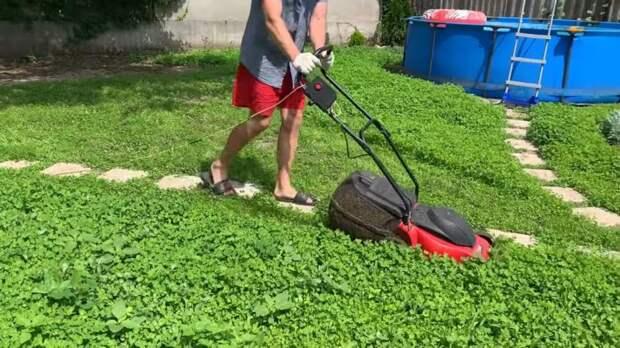 Газон для ленивых: лёгкий в уходе, редко требует стрижку — идеальный клеверный газон