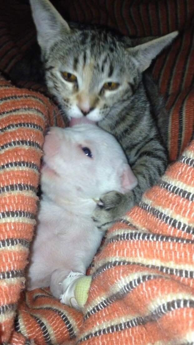 Крохе-щенку собака отгрызла половину лапки, но сироту взяли под защиту коты